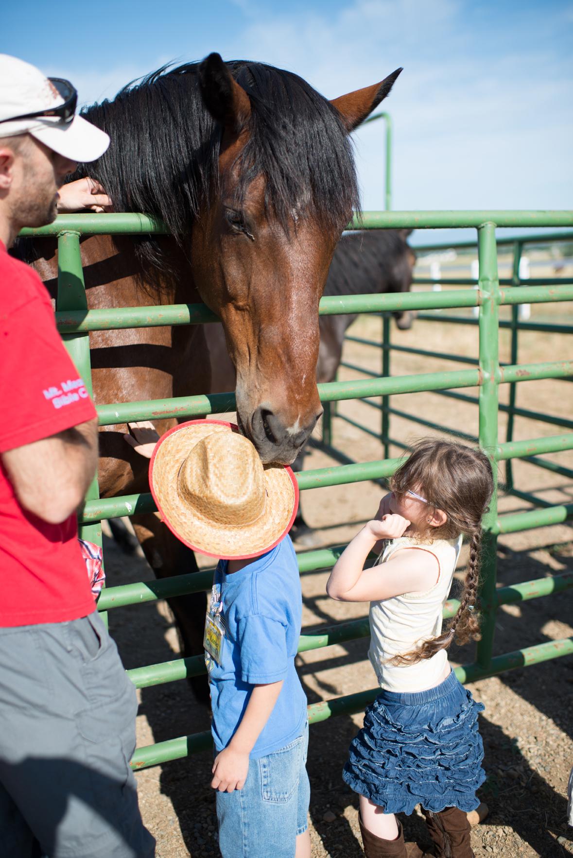 Farm Field Trip - Horse